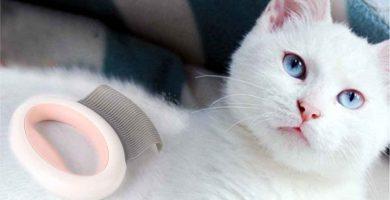 Comparativa de los dos mejores Cepillos para gatos