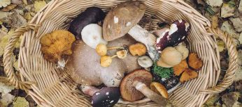 Rebozuelo, champiñón silvestre, níscalo o colmenilla en unas jornadas gastronómicas