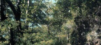 Madeira tiene uno de los pocos bosques de laurisilva del mundo