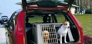 Transporte de perros en un coche.