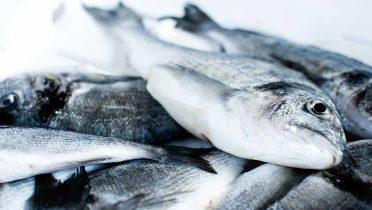 Fraude en la venta de pescado: se cobra dos o tres veces más por lubinas o doradas de piscifactoría