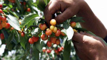 Los alimentos multiplican su precio casi por cinco del campo a la mesa