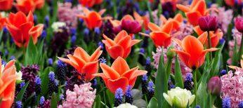 Ya es primavera en Keukenhof