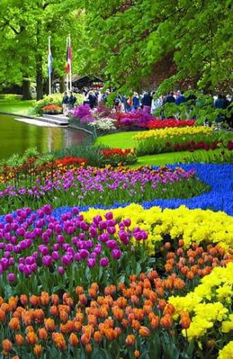 Ya es primavera en los jardines de Keukenhof