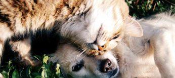 Ya se puede asegurar a perros y gatos