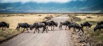 La mitad de los conductores ha sufrido una situación de riesgo por un animal