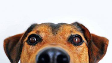 Perros que adiestran a directivos