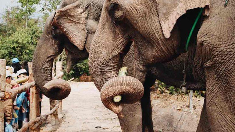 Los mejores zoos de Europa
