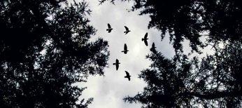 Los mejores lugares de Portugal para el avistamiento de aves
