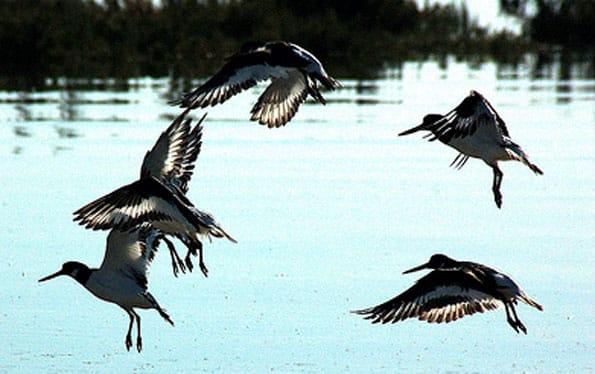 Aves en el Algarve, al sur de Portugal