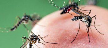 El mosquito seguirá con sus picaduras muchos veranos