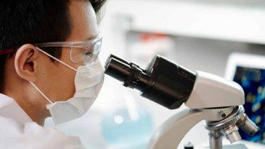 Luz verde a limitar el uso de animales en experimentos científicos