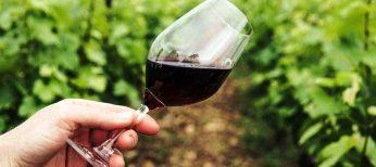 Las mejores rutas del vino de Europa
