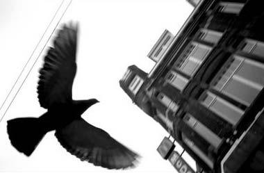 Pájaro volando
