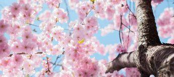 Las primaveras más espectaculares