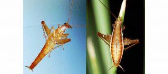 Las especies más raras y curiosas