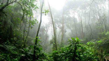 Google mostrará en el Street View la selva y el río del Amazonas