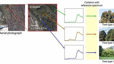 Fotografías aéreas con una cámara hiperespectral permiten identificar qué tipo de árboles crecen en cada lugar