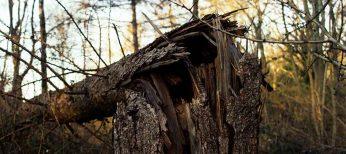 Consulta Legal: ¿Qué consecuencia legal puede tener que arranque un árbol?