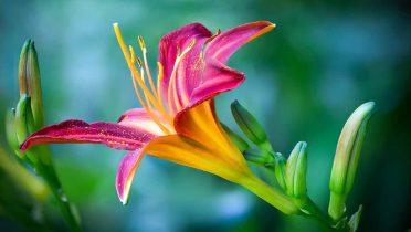 Plantas exóticas utilizadas para decorar jardines pueden afectar a la salud humana provocando alergias
