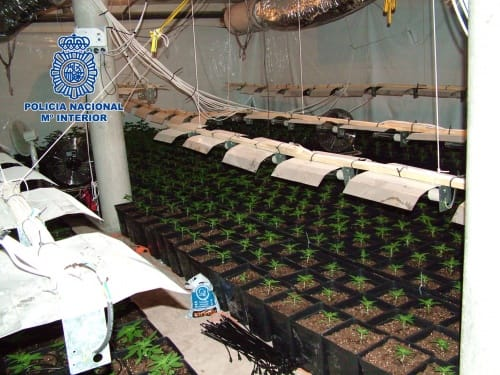 Plantacción de cannabis en un chalet.