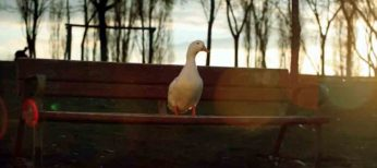 Liberad al pato Willix con X de Mixta es el anuncio que más se ha visto en 2011 en Youtube