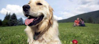 Un perro te ayuda a vivir más años
