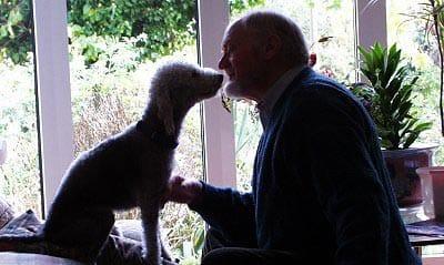 El mejor amigo del hombre, el perro, también ayuda a vivir más años.