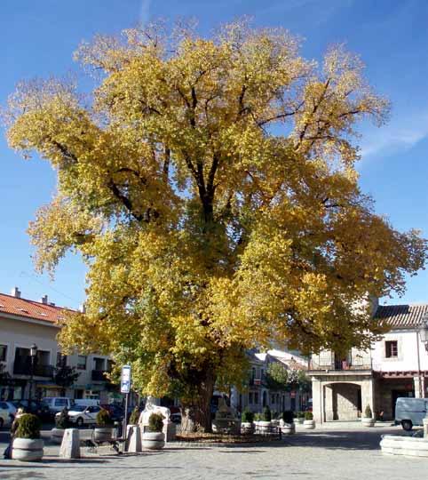 Centro de la localidad de Guadarrama, en la sierra madrileña.