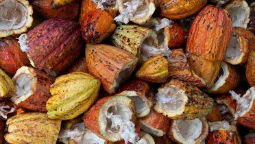 Se buscan voluntarios de entre 50 y 80 años con obesidad para un estudio sobre adelgazamiento con cacao