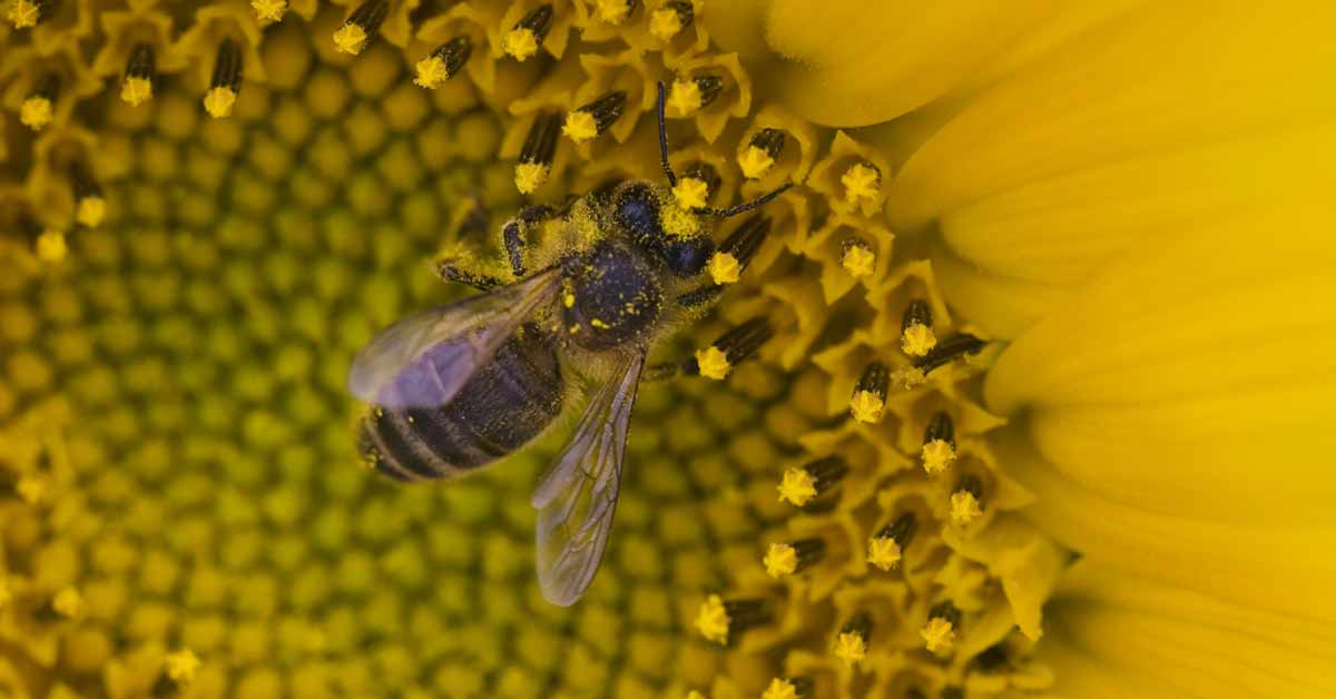 Los alimentos derivados de la polinización de las abejas suben su precio