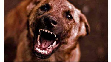El dolor de cadera enfurece a los perros