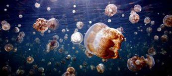 ¿Qué hacer si te pica una medusa?