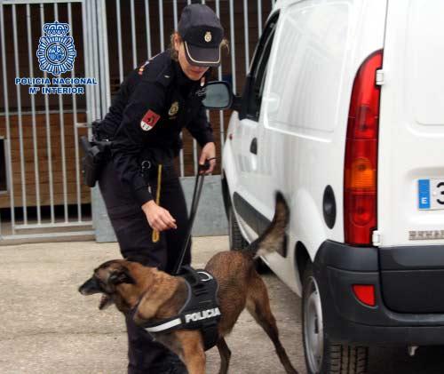 Perro Policía que ayudó a encontrar los billetes de euro de la operación Emperador en Cobo Calleja.