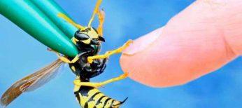 Si eres alérgico extrema las precauciones ante picaduras de abejas y avispas durante septiembre y octubre