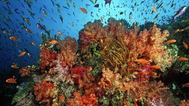 ¿Cuántos peces hay en el mar?