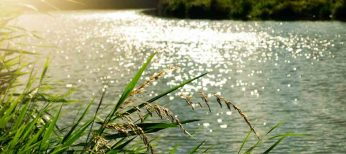 Crecida de ríos y desbordamiento del agua: qué debes saber por seguridad