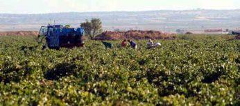 El sabor del vino empeora por el cambio climático