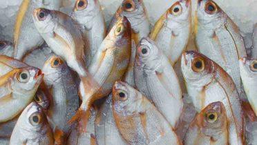 Al microondas o hervido, el pescado reduce casi a la mitad las toxinas