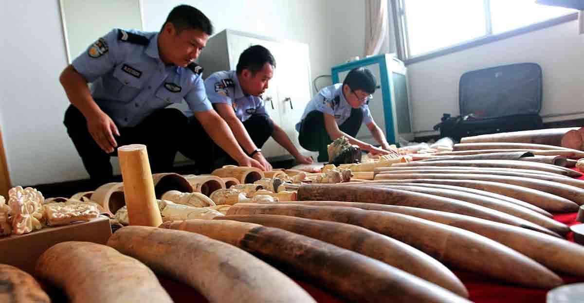 El comercio ilegal de marfil causa la muerte de 30.000 elefantes cada año