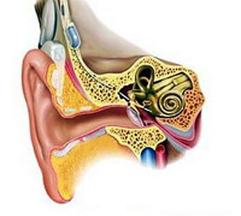 Imagen del oído humano.