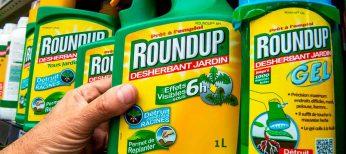 El herbicida 'benigno' RoundUp es tóxico