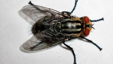 Una mosca por dentro
