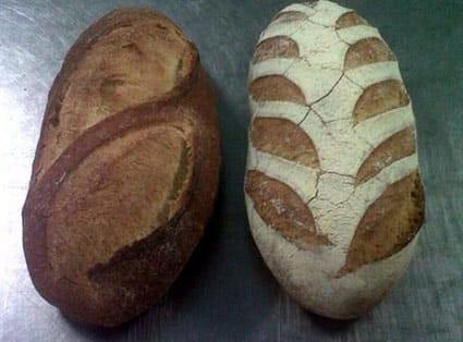 Tritordeum, el nuevo cereal con el que se puede elaborar pan.