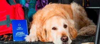 Pasaportes y vacunas antirrábicas para viajar con perros, gatos y hurones por Europa