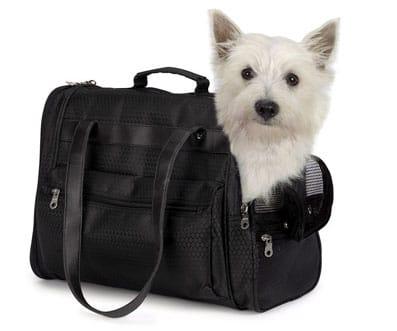 Un perro transportado dentro de un bolso.