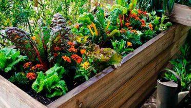 Cómo montar un huerto urbano en tu propia casa o en una terraza