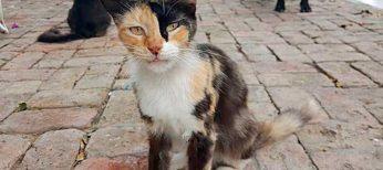 Los gatos callejeros son un peligro para la salud pública