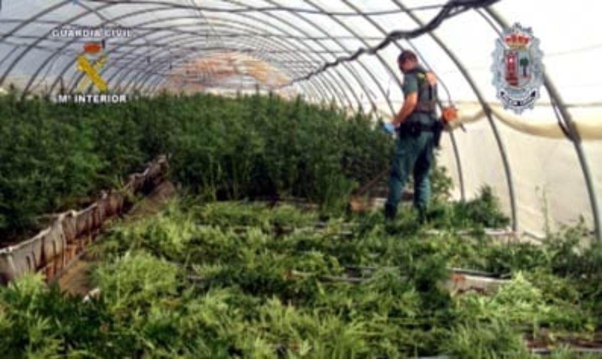 Un agente de la Guardia Civil en la mayor plantación de marihuana de España.