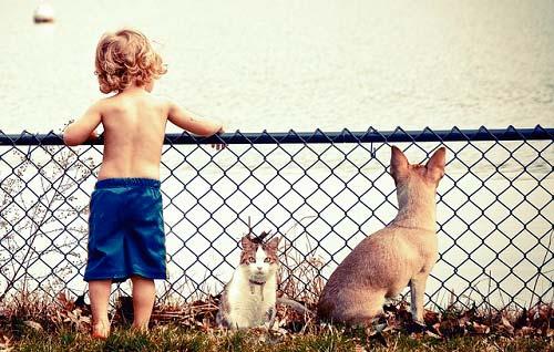 Los gatos y los perros mejoran la salud de los bebés-1